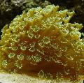 Photo Flowerpot Coral  description