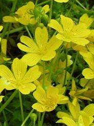 växter i tempererat klimat