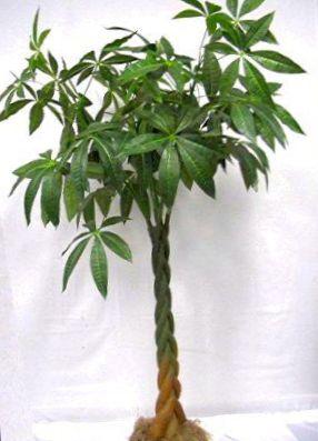 Acheter en ligne vert des plantes en pot ch taignier for Acheter plantes en ligne
