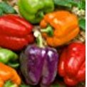 Organic Rainbow Mix Pepper 150 Seeds #98182 Item Upc#650348692605 Each color has its own distinctive flavor Photo, bestseller 2018-2017 new, best price $1.18 review