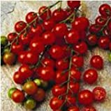 Seeds and Things 30 Sugar Sweet Cherry Tomato Seeds Photo, bestseller 2017-2016 new, best price $3.20 review