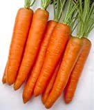 OrOlam Carrot Tendersweet Organic Non GMO 250 Seeds Photo, bestseller 2019-2018 new, best price $4.41 review