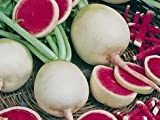 Green Leaf ® *Watermelon Red Radish 250 + Seeds GARDEN FRESH PACK Photo, bestseller 2018-2017 new, best price $2.98 review