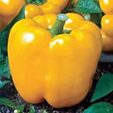 Sunbright Yellow Bell Pepper Seeds 150 Seeds By Jaysseeds™ Upc 643451294866 +3 Free Plant Markers Photo, bestseller 2017-2016 new, best price $6.29 review