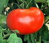 55+ Big Boy Hybrid Tomato Seeds Photo, bestseller 2018-2017 new, best price $1.80 review