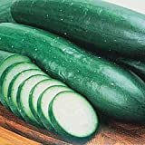 - 	 Burpless Bush Cucumber - 25 Seeds-GARDEN FRESH PACK! Photo, bestseller 2018-2017 new, best price $2.05 review
