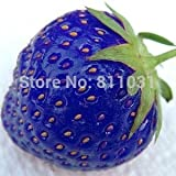 Hot selling 100pcs/bag blue strawberry rare fruit vegetable seed bonsai plant home garden free shipping Photo, bestseller 2018-2017 new, best price $3.95 review