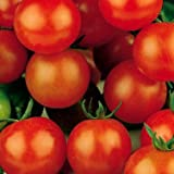Sugar Sweetie Cherry Tomato - 30 Seeds - Organic Photo, bestseller 2018-2017 new, best price $1.70 review