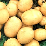 Rare Ukrainian Organic vegetable True Potato seeds Asol, Early Solanum Tuberosum Photo, bestseller 2018-2017 new, best price $1.98 review