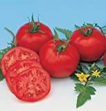 David's Garden Seeds Tomato Slicing Moskvich D756A (Red) 50 Organic Heirloom Seeds Photo, bestseller 2018-2017 new, best price $8.49 review