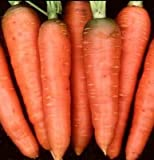 Carrot Chantenay Red Core Great Heirloom Vegetable BULK 40,000 Seeds Photo, bestseller 2017-2016 new, best price $11.95 review