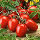 Organic Roma Tomato Seeds, 300+ Premium Heirloom Seeds!, ON SALE!, (Isla's Garden Seeds), Non Gmo Organic, 85% Germination Photo, bestseller 2018-2017 new, best price $5.59 review