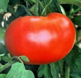 50 Better Boy Tomato Seeds - JDR Seeds Photo, bestseller 2017-2016 new, best price $5.69 review
