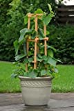 F1 Patio Snacker Bush Cucumber 25 seeds