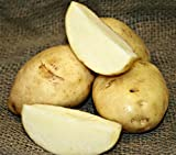 5 lb. SEED POTATOES - Kennebec Russet - Organic - ORDER NOW for FALL PLANTING Photo, bestseller 2019-2018 new, best price $13.49 review