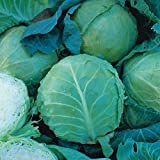 Cabbage - Holland Late Winter - 500 Seeds Photo, bestseller 2018-2017 new, best price $1.39 review