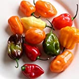 David's Garden Seeds Pepper Hot Habanero Rainbow Mix SL163 (Multi) 50 Open Pollinated Seeds Photo, bestseller 2019-2018 new, best price $8.45 review