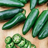 Jalepeno Tam Hot Peppers Seeds, 150+ Premium Heirloom Seeds!, 99.7% Purity, ON SALE!, (Isla's Garden Seeds), Non GMO Organic Survival Seeds,Highest Quality! Photo, bestseller 2018-2017 new, best price $5.99 review