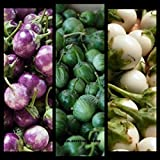 (600) Edible Asian Vegetable seeds Small Round White,Green,Purple Thai eggplant (Solanum Melongena) by Viablekitchenseeds-US Photo, bestseller 2018-2017 new, best price $3.63 review