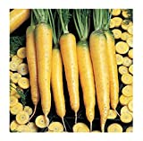 David's Garden Seeds Carrot Yellowstone SL9374 (Yellow) 500 Open Pollinated Seeds Photo, bestseller 2019-2018 new, best price $6.95 review