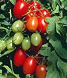 Juliet Grape Tomato 15 Seeds - High yields! Photo, bestseller 2019-2018 new, best price $1.69 review