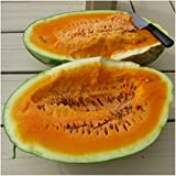 Package of 20 Seeds, Orangeglo Watermelon (Citrullus lanatus) Non-GMO Seeds By Seed Needs Photo, bestseller 2018-2017 new, best price $3.65 review