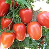 TOMATO, ROMA TOMATO SEED, ORGANIC, NON- GMO, 25 SEEDS PER PACKAGE Photo, bestseller 2017-2016 new, best price $2.89 review