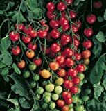 David's Garden Seeds Tomato Cherry Supersweet 100 SL3981A (Red) 25 Hybrid Seeds Photo, bestseller 2018-2017 new, best price $8.45 review