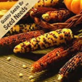 Seed Needs 500 Seeds, Ornamental Corn Carousel Mixture (Zea mays) Seeds Photo, bestseller 2018-2017 new, best price $7.85 review
