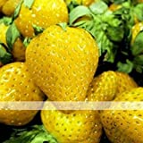 (Sweet Yellow *Ambizu*) 200 Seeds / Pack, Sweet Yellow Alpine Strawberry Seed Non-gmo Organic Fruit Photo, bestseller 2017-2016 new, best price $3.99 review