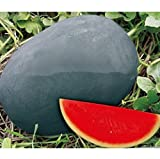 Sweet giant Black skin watermelon seeds, seedless watermelon seeds, garden planting, courtyard bonsai fruit - 20 particles/ bag Photo, bestseller 2018-2017 new, best price $2.87 review
