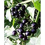 *Seeds and Things Garden Huckleberry Bush 35 Seeds Photo, bestseller 2018-2017 new, best price $5.99 review
