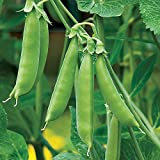 Burpee Sugar Snap Pea Seeds  300 seeds Photo, bestseller 2018-2017 new, best price $8.49 review