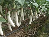 Pure White, Long Eggplant Seeds -100 Seeds- Very Productive - Organic ! Photo, bestseller 2018-2017 new, best price $2.00 review