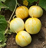 David's Garden Seeds Cucumber Pickling Lemon D329 (Yellow) 50 Organic Heirloom Seeds Photo, bestseller 2018-2017 new, best price $8.49 review