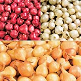 Onion Sets ,MIX, Red,Yellow,White (50-70 bulbs) Garden Vegetable Photo, bestseller 2018-2017 new, best price $13.50 review