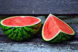 Crimson Sweet Watermelon Seeds Photo, bestseller 2018-2017 new, best price $3.98 review