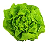 Buttercrunch Lettuce (aka Butter Head Lettuce) 1000+ Seeds. Certified Organic Non-GMO. Sprouting Guaranteed. Photo, bestseller 2018-2017 new, best price $2.99 review