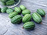 100 Mexican Sour Gherkin Cucumber,Seeds ! looks like miniature watermelons Photo, bestseller 2018-2017 new, best price $4.95 review