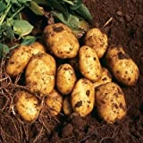 SEED POTATOES - 1 lb. Nicola Organic Grown Non GMO Virus & Chemical Free Ready for Spring Planting Photo, bestseller 2018-2017 new, best price $8.24 review