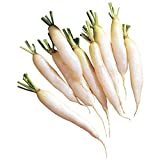 Burpee White Icicle Radish Seeds 650 seeds Photo, bestseller 2018-2017 new, best price $8.49 review