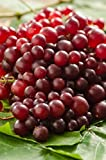 Muscadine Grape Plant - RazzMatazz! Rare variety with delicious flavor and 5x as many clusters as other grapes. Photo, bestseller 2018-2017 new, best price  review