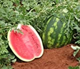 Crimson Sweet Watermelon Seeds, 150+ Premium Heirloom Seeds, ON SALE!, (Isla's Garden Seeds), Non Gmo Organic, 85% Germination Photo, bestseller 2018-2017 new, best price $5.99 review