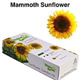 Garden Starter Kit (Mammoth Sunflower) – Grow sun flower seed in a mini greenhouse, then plant a beautiful patch of Sunflowers in your backyard. It's easy, fun, and a great gift for adults and kids. Photo, bestseller 2018-2017 new, best price $9.99 review