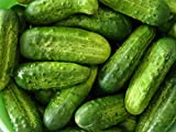 David's Garden Seeds Cucumber Pickling National SL2450 (Green) 50 Organic Seeds Photo, bestseller 2018-2017 new, best price $8.45 review