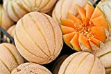 20+ ORGANICALLY GROWN Italian Arancino Melon Cantaloupe Seeds, Heirloom NON-GMO, Super Sweet and Fragrant, Productive and Dependable, From USA Photo, bestseller 2018-2017 new, best price $2.65 review
