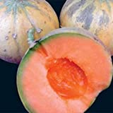 Heirloom French CHARENTAIS MELON Cantaloupe✽75 SEEDS✽Sweet✽FLAT RATE COMBINE S/H Photo, bestseller 2018-2017 new, best price $8.50 review
