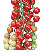 Burpee Super Sweet 100 Tomato Seeds 50 seeds Photo, bestseller 2019-2018 new, best price $8.49 review