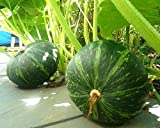 Japanese Pumpkin Kabocha Seeds - Open Pollinated, Heirloom,20 Seeds Photo, bestseller 2017-2016 new, best price $4.40 review