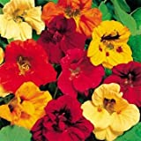 Outsidepride Nasturtium Seed Mix - 1/4 LB Photo, bestseller 2018-2017 new, best price $6.99 review